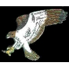 HAWK WITH SWEPT OUT WINGS PIN