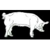 PIG PIN WHITE YORKSHIRE PIG PIN