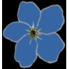 BLUE FORGET ME NOT FLOWER PIN